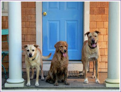 Three_dogs_cute