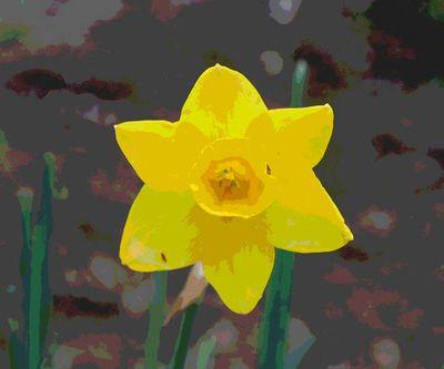 Daffodiljpg